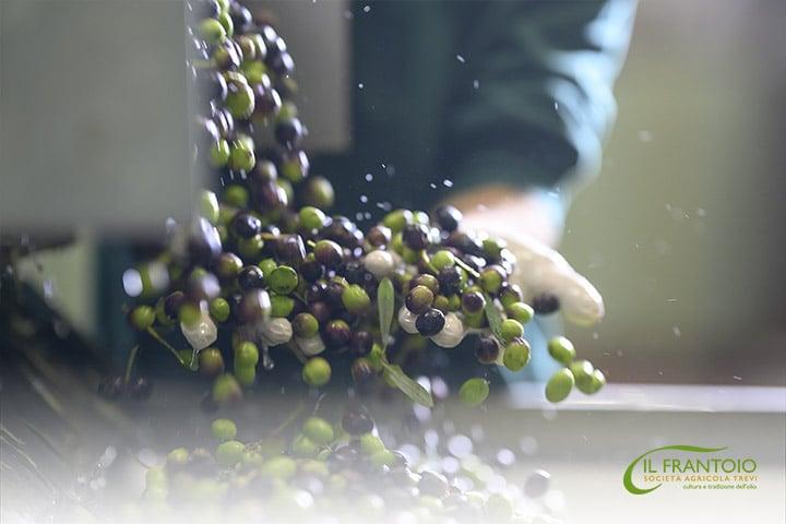 spremitura-olive