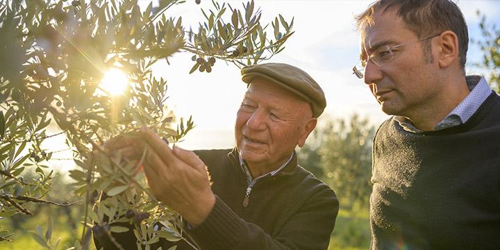 Sai riconoscere l'olio extravergine di oliva migliore?