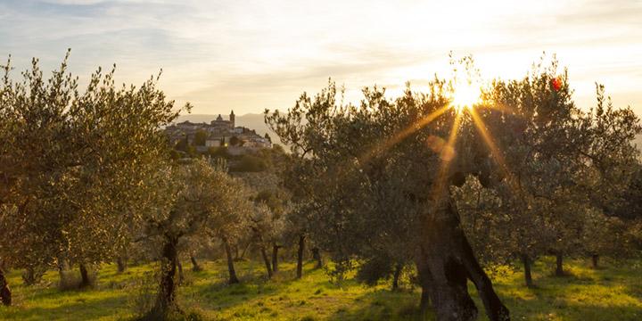 Qual è il miglior olio extravergine di oliva italiano?